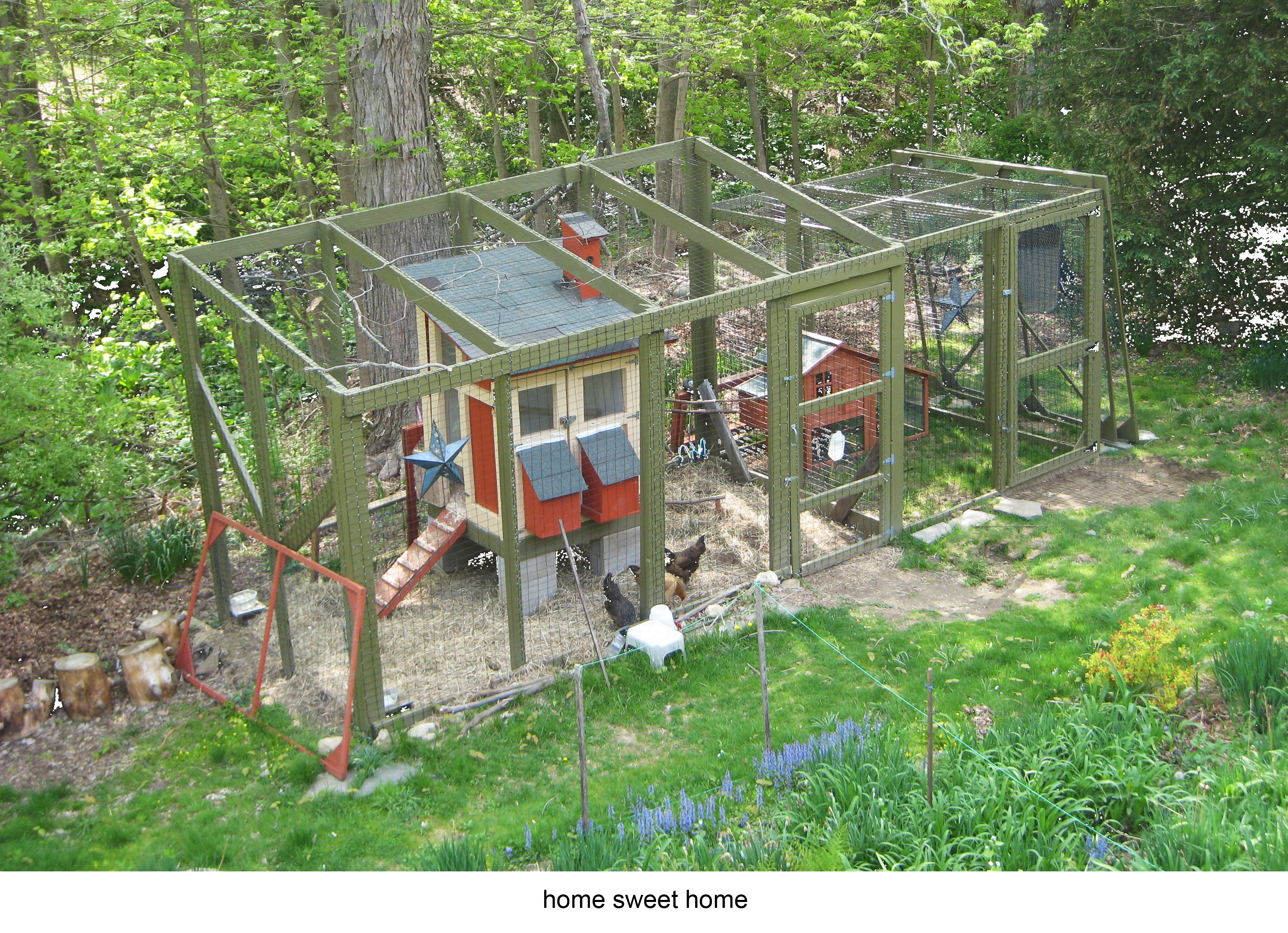 learn how to raise chickens in your own backyard u2013 good morning wilton
