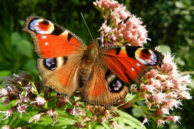 Walk Among the Butterflies with Wilton Conservation Commission
