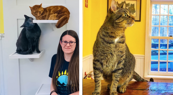 Cats will be 'Feline' Fine at Passage East Kennel's New Cat Cottage