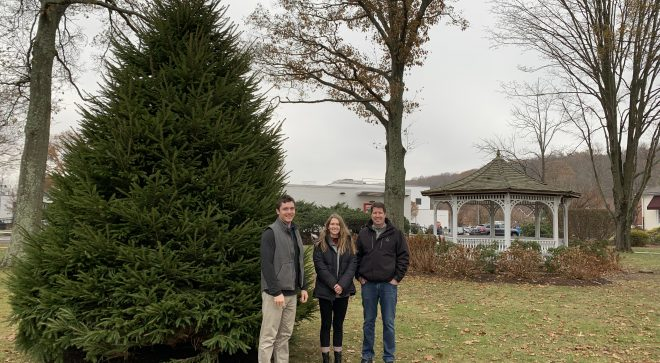Out With the Old…Town Replaces Ailing Evergreen Tree on Town Green with New Norway Spruce