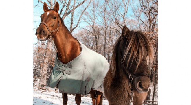 """New """"Neigh""""-Bors: Rising Starr Horse Rescue Moves to Wilton, Leading the Horse World with Love"""