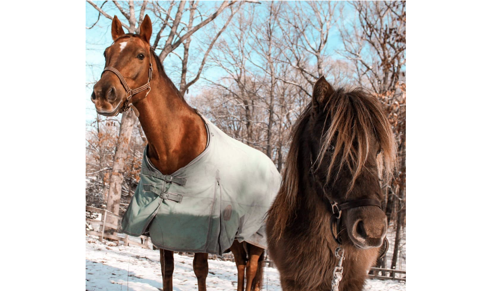 "New ""Neigh""-Bors: Rising Starr Horse Rescue Moves to Wilton, Leading the Horse World with Love"